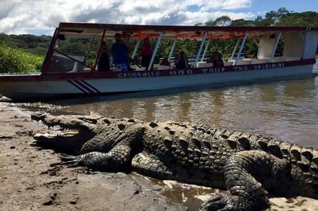 Crocodile Tarcoles Tour