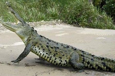 Jaco Costa Rica Crocodile Tour